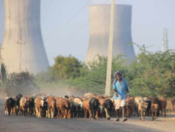 Herds, power plants