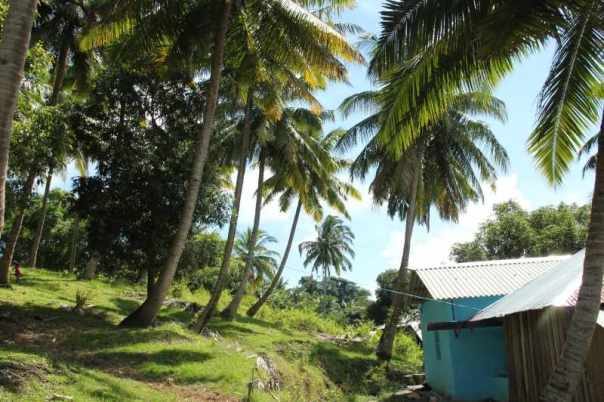 Houses under coconut trees
