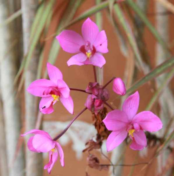 Orchids of sort
