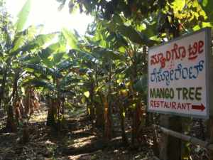 Path to Mangotree