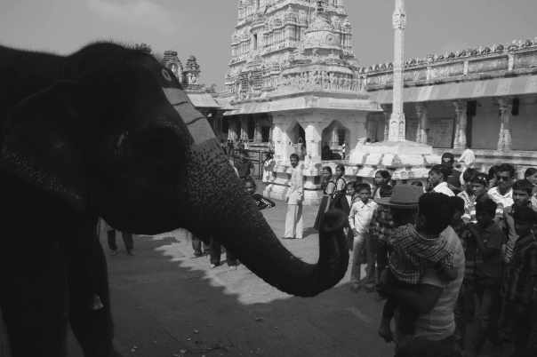 Temple Elephant belssing Varun and Vipul