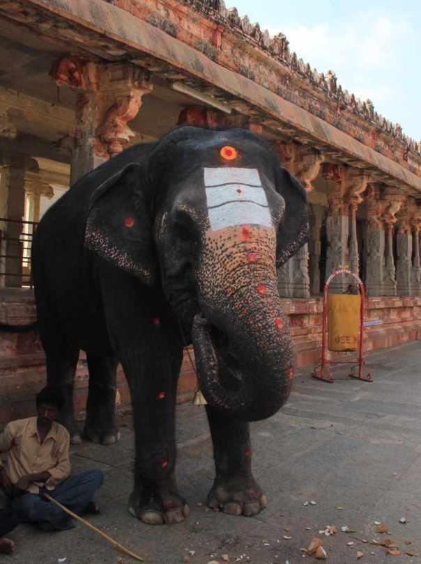 Temple Elephant in Virupaksha temple